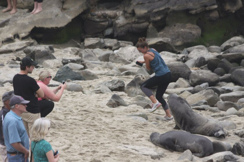 ... and the sea lion reacts loud enough to scare the person away.