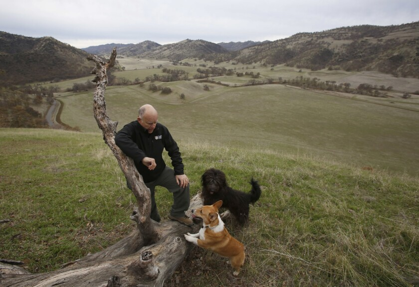 Former Gov. Jerry Brown pauses while taking a walk with his dogs Colusa, center, and Cali, right, on his Colusa County ranch near Williams.