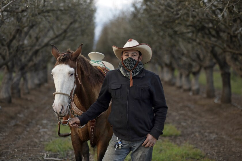 Ramon Larios, a pistachio farmer in Madera County, says his business hasn't been affected by the coronavirus and that jobs are plentiful. His horse is named El Masqarillo, or Mask, for his white face.