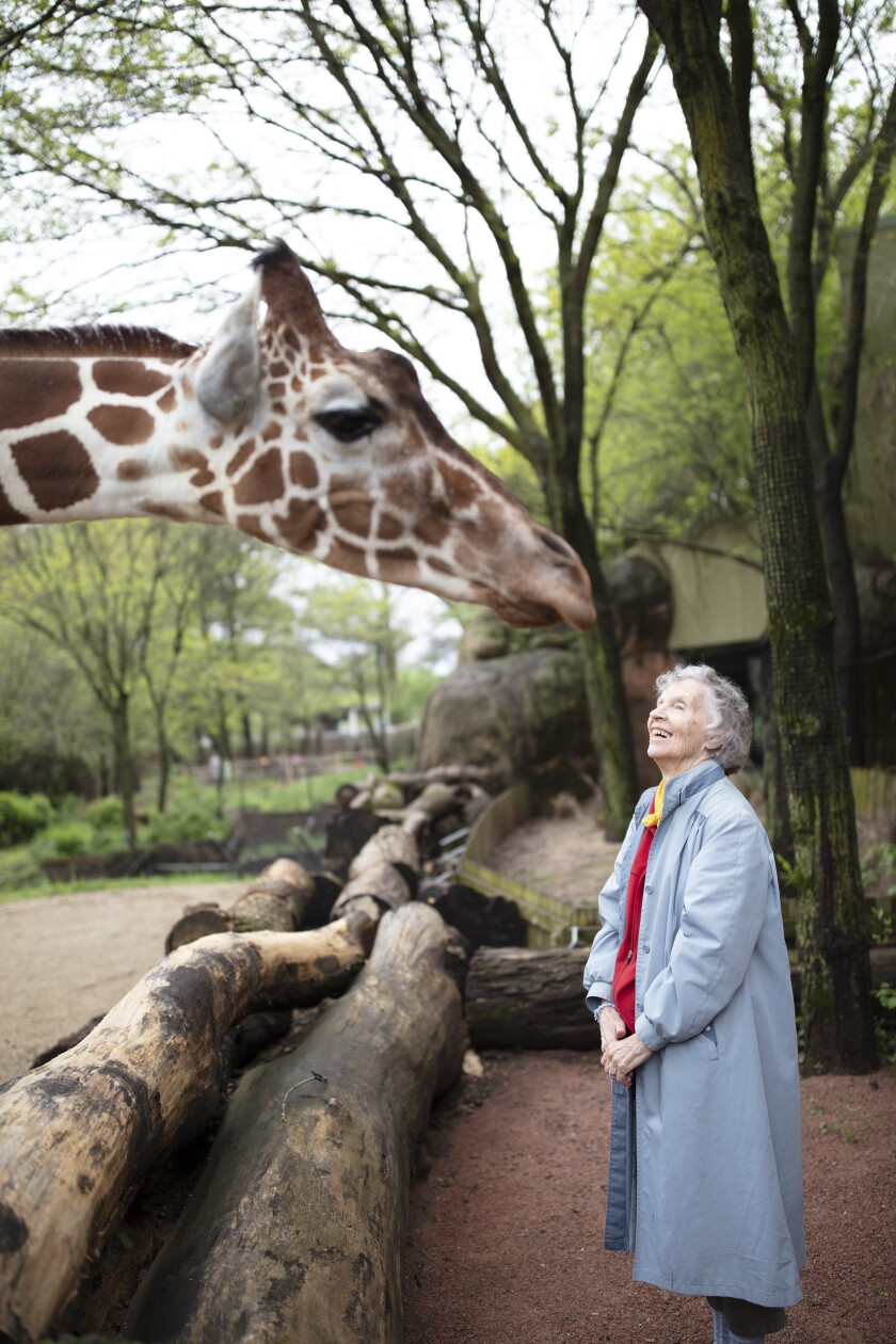 "Anne Innis Dagg admires one of the long-necked animals in the documentary ""The Woman Who Loves Giraffes."""