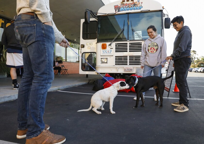 Sayer Villa, left, holds on to his 6-month-old boxer-pitbull mix, Zero, as he greets Dozier, a Staffordshire terrier, as his owners Moorea Melton and Maritza Curtice wait at a Spay-Neuter Action Project clinic recently at Camp Run-a-Mutt in Chula Vista. SNAP offers low- to no-cost spay and neuter services to low-income communities.