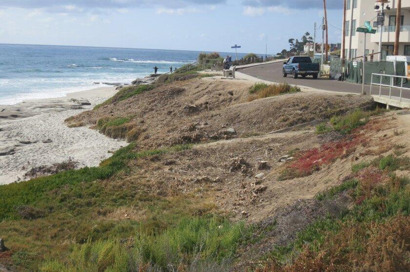 Trees cut down at La Playa del Sur
