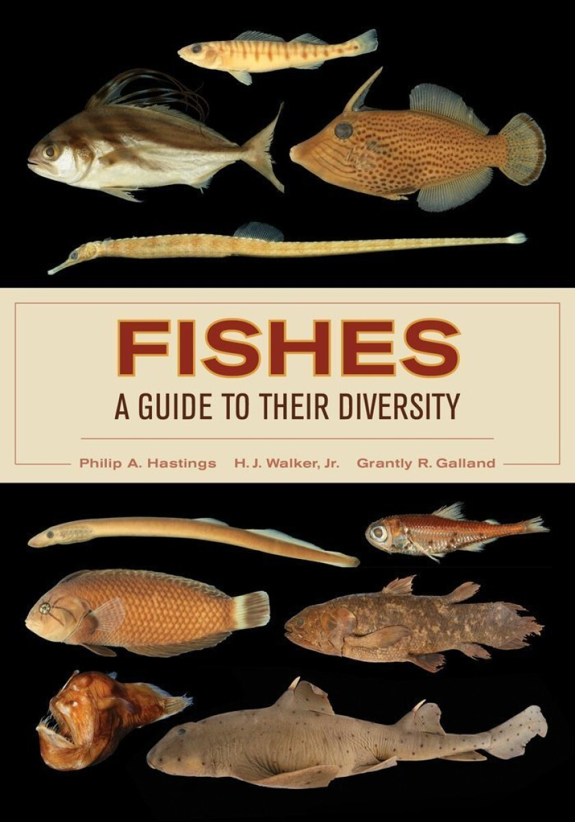 best_bet.diversity_fishes
