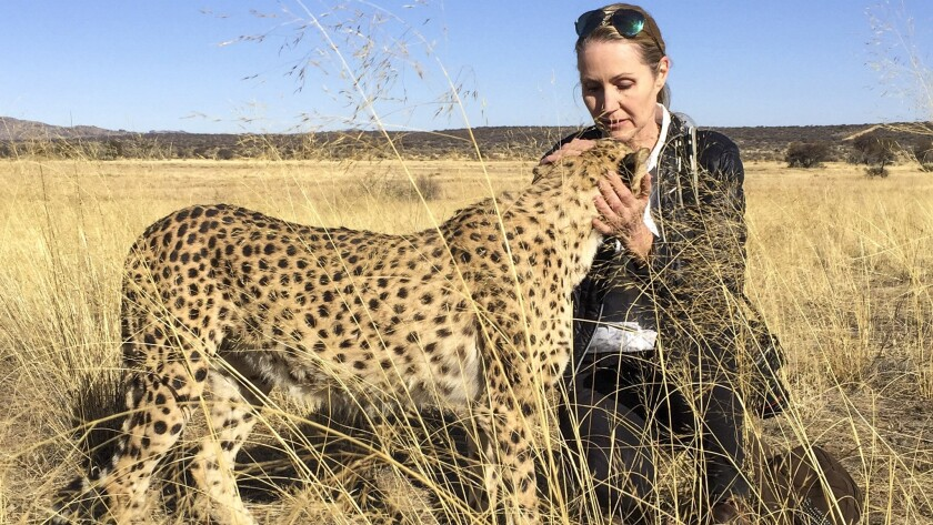 Amanda Jones pets Kiki, an orphaned cheetah raised by the owners of the farm at Naankuse sanctuary n
