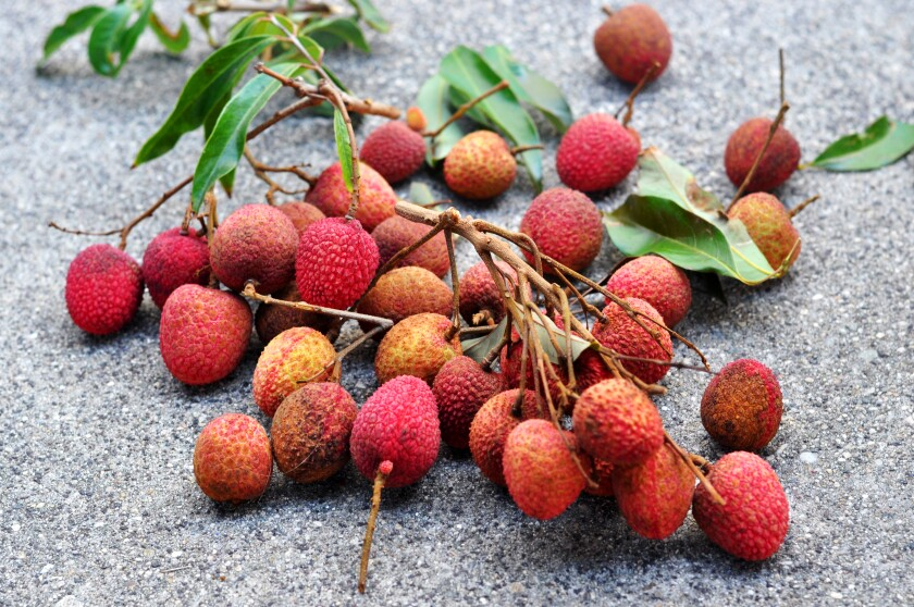 Lychees from the Dimitman farm at the Alhambra farmers market.