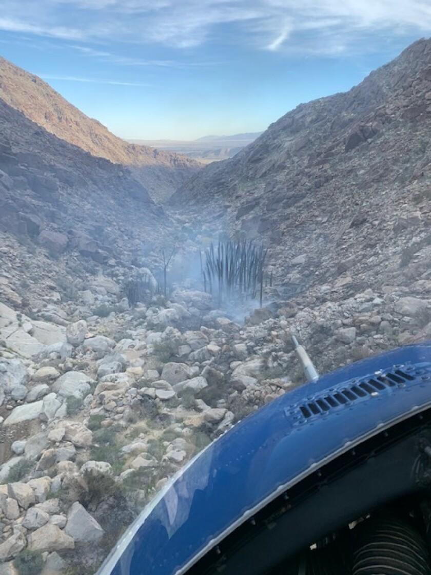 A stand of palm trees at the Borrego Palm Canyon trailhead were burned in a fire Saturday.