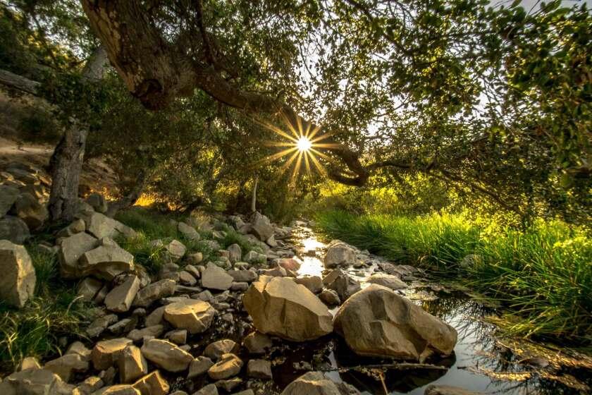 Golden Sunburst over Escondido Creek
