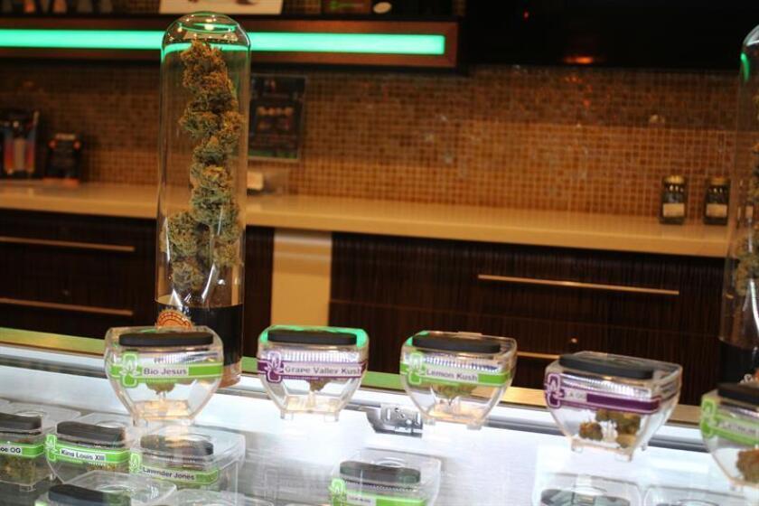 El estado de Vermont está a un paso de legalizar el uso de la marihuana con fines recreativos después de que la Cámara de Representantes local aprobara hoy una ley en ese sentido, informó la prensa local. EFE/ARCHIVO