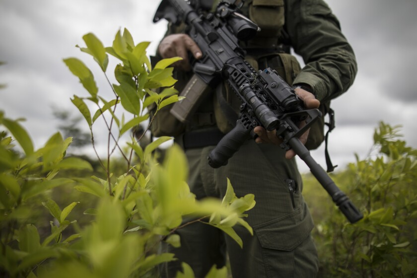 FILE - In this Dec. 30, 2020 file photo, a police officer stands on a coca field during a manual eradication operation in Tumaco, southwestern Colombia. Mosquera facing up to 20 years in a federal U.S. prison for allegedly betraying the Drug Enforcement Administration to the same drug traffickers they were jointly fighting. (AP Photo/Ivan Valencia, File)