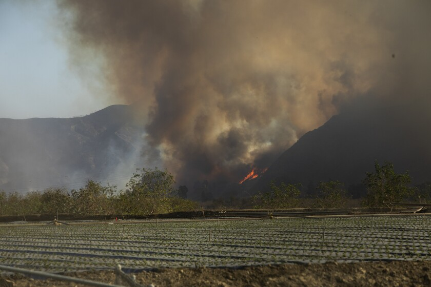 Flames and smoke from the Maria fire fill the air next to an agricultural field in the town of Saticoy on Friday.