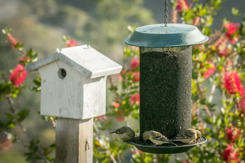 A wren nestbox with a neighboring nyjer seed feeder.