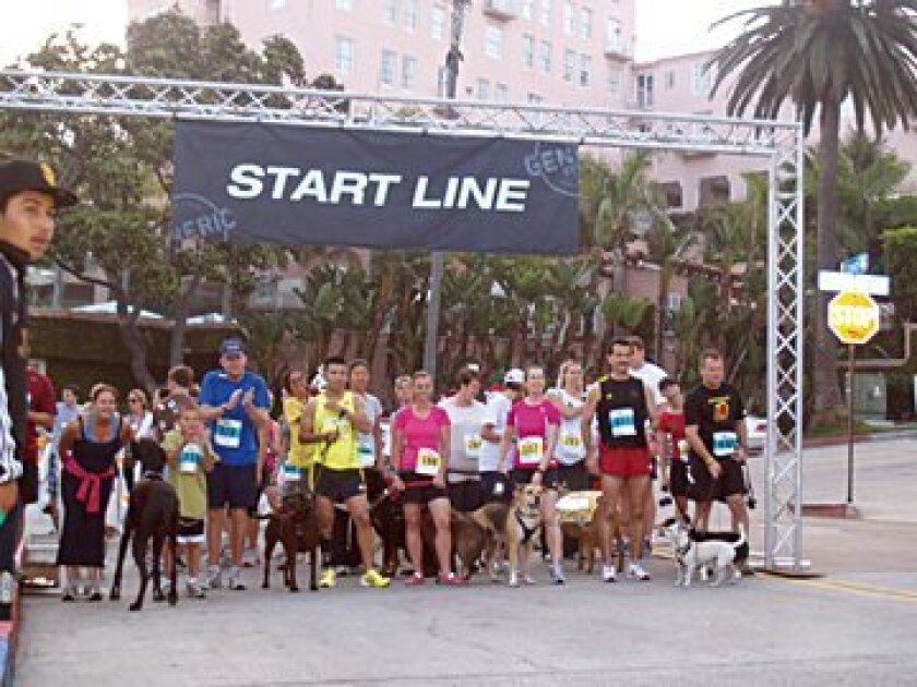 And they're off in the Mutt Mile segment of this year's Coastwise Mile. Photos Ashley Blanco
