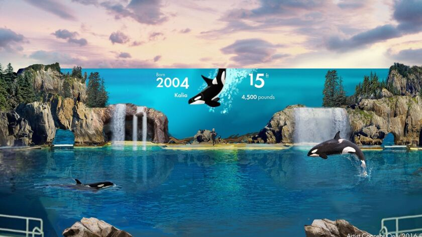 A rendering of the new stage setting for SeaWorld's planned orca encounter is meant to mimic a rugged coastal inlet in the Pacific Northwest, complete with a waterfall, trees and rockscape.