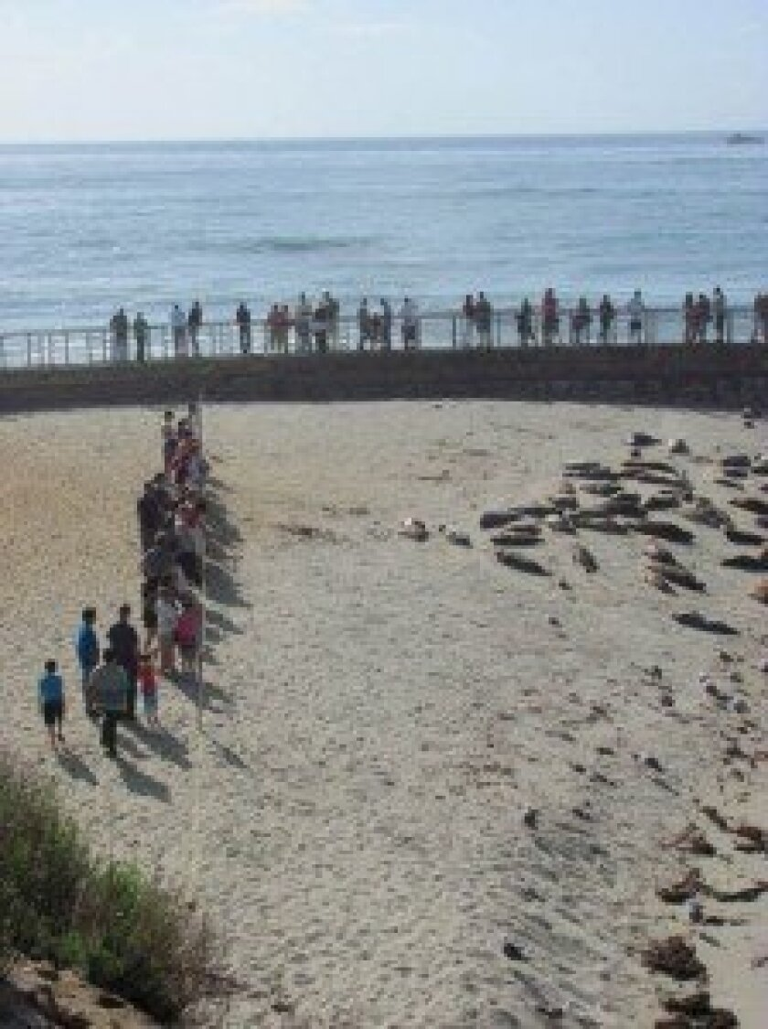 The 152-foot-long seal rope serves to keep beach-goers a safe distance from seals at Children's Pool in La Jolla. File