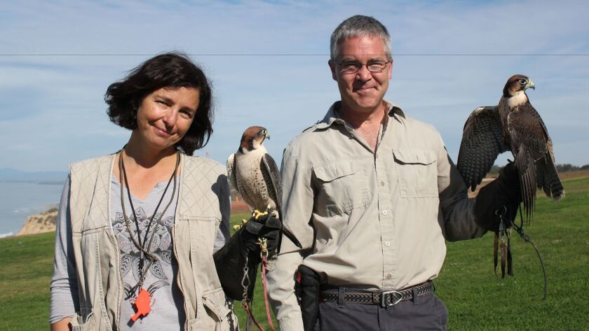 Antonella Zampolli with Bunco (lanner falcon, 2-and-a-half years old, 1 pound) and David Metzgar with Sophia (lanner falcon, 1-and-a-half years old, 0.8 pounds).