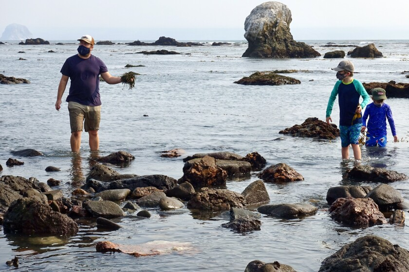 Spencer Marley leads a seaweed-foraging tour
