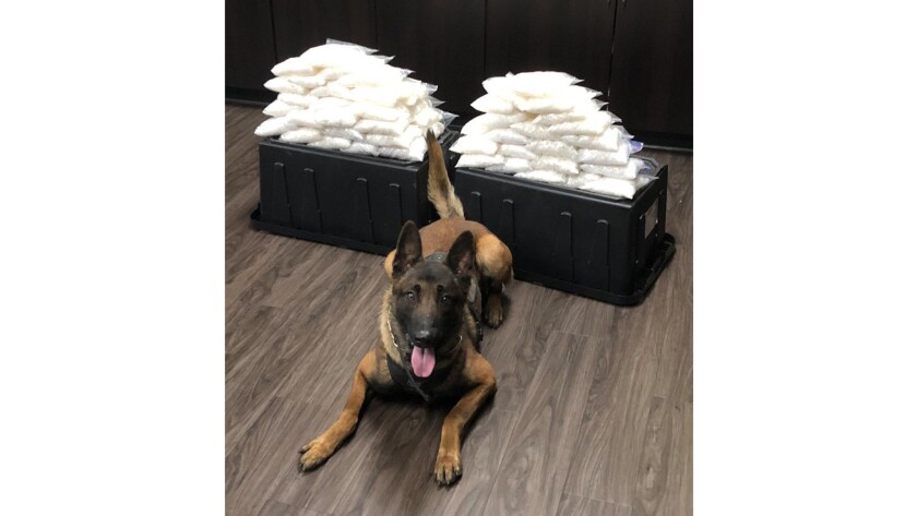 In its first bust, West Covina police dog finds 60 pounds of meth in