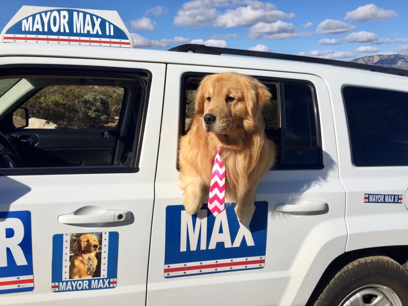 Mayor Max in truck with tie.jpg