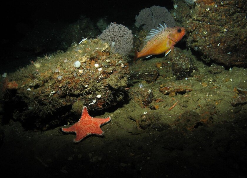A starfish, coral and a green spotted rockfish. —Photo Courtesy of Oceana