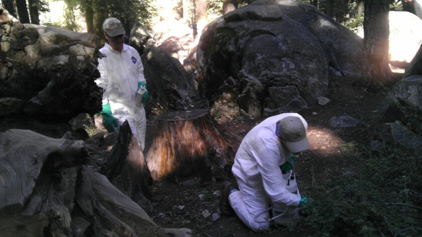 Plague found at campground