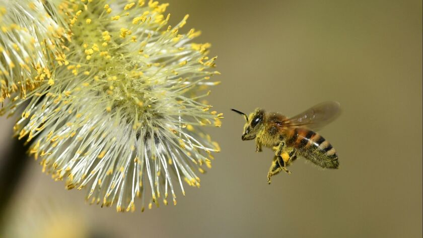A swarm of bees terrorized a Ceres, Calif., neighborhood on Sunday and killed a dog, police said.
