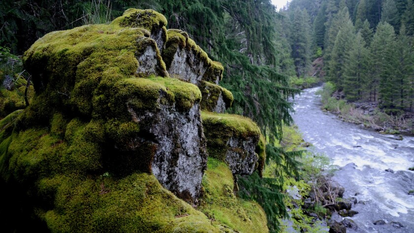 The Rogue River Gorge is just outside Crater Lake National Park in Oregon.