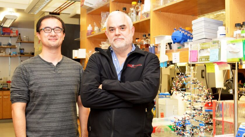 Professor Floyd Romesberg (right) and Graduate Student Yorke Zhang led the new study at The Scripps Research Institute, along with Brian Lamb (not pictured).
