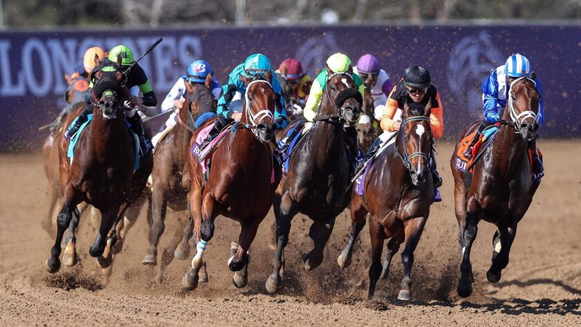 Horses in the eighth race round the turn during the Breeders' Cup at the Del Mar racetrack in Del Mar on Saturday. Mind Your Biscuits (far left in blue and orange silks), a horse trained by Chad Summers, came in third.