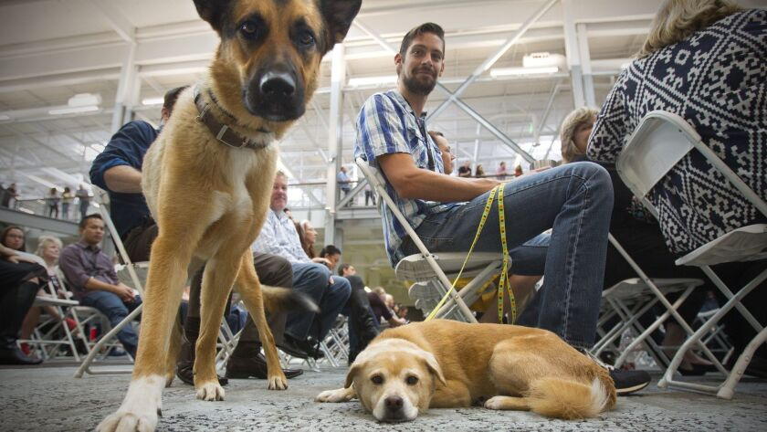 Odie, a German shepherd mix and Link, a shiba inu mix were two of the pets to attend a grand opening gathering at the newly opened 300,000 square-foot Petco corporate headquarters in Rancho Bernardo.