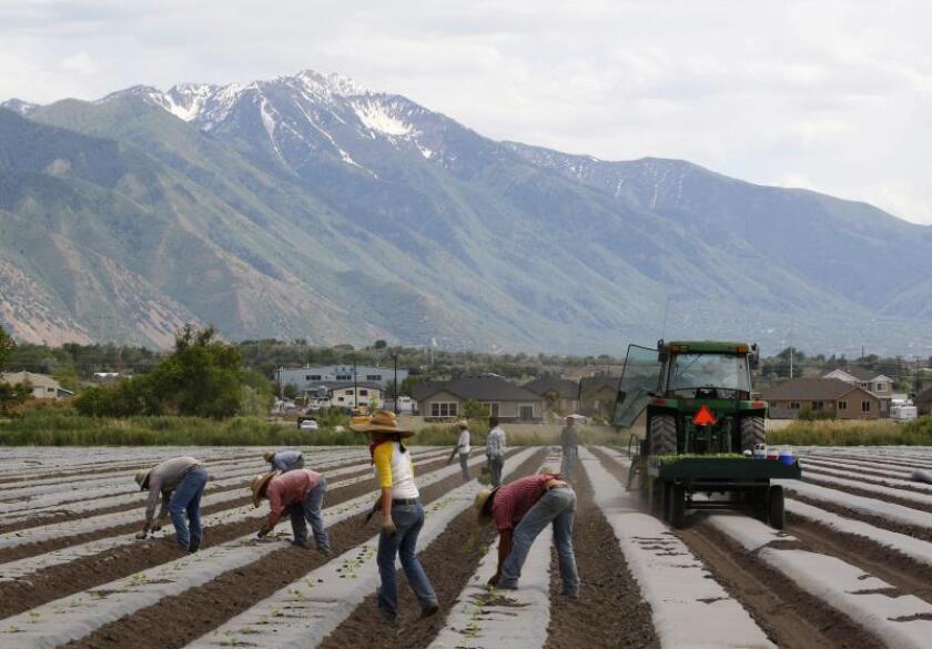 """Granjeros alertan que cerrar la frontera mexicana """"paralizará"""" la agricultura"""