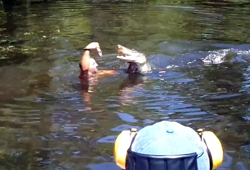 This screen grab from video released by Stacy Hicks shows an unidentified tour guide for Airboat Adventures swimming with and feeding alligators, at one point feeding a marshmallow to a gator with his teeth. (AP Photo/Stacy Hicks)