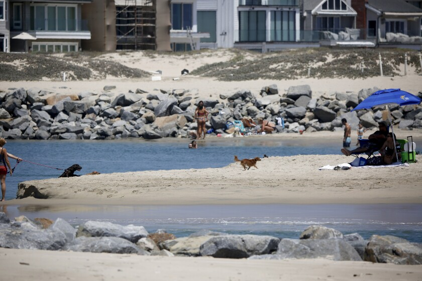People and their dogs enjoy the beach