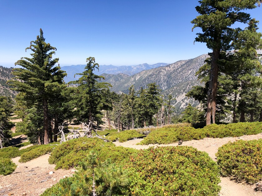 The trail to Timber Mountain in the Mt. Baldy area is one of the trails that reopened.