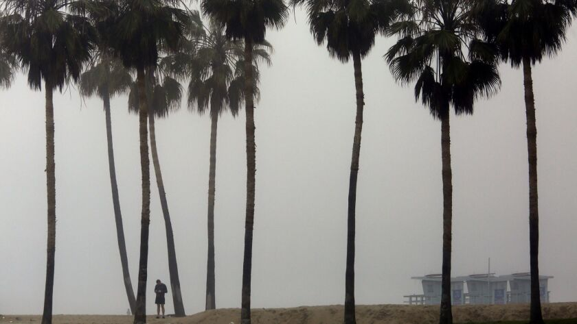 VENICE, CA - MARCH 12, 2017 -- Fog provides a nice backdrop for row of palm trees in Venice Beach