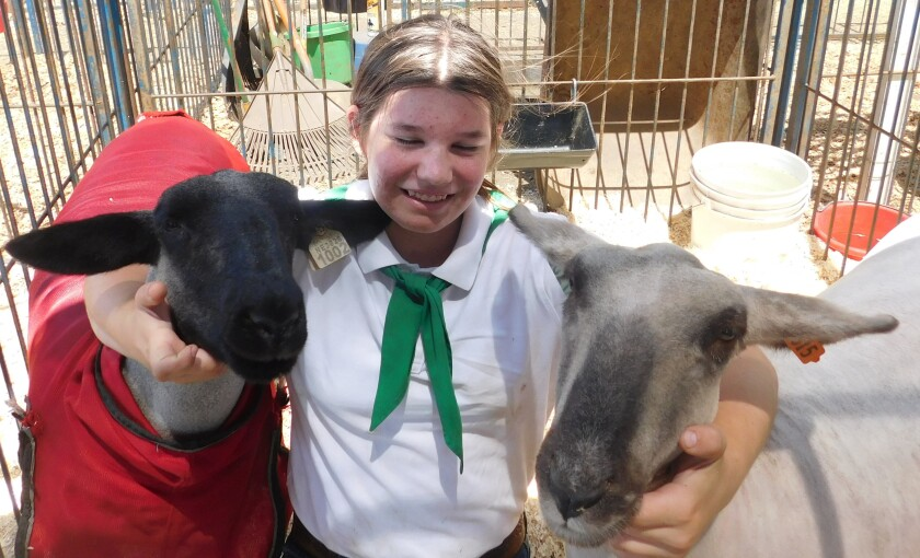 Ramona Junior Fair participant Lexi McCaffree shows off her sheep, Frosty and Baaabra.