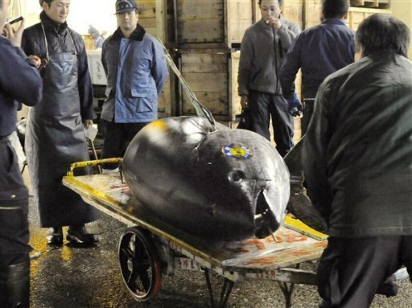 Bidders look at a giant bluefin tuna on a cart after it was sold at auction at Tsukiji fish market in Tokyo, Wednesday, Jan. 5, 2011. The tuna fetched a record 32.49 million yen, or nearly $396,000, in the first auction of the year at the world's largest wholesale fish market in Japan. (AP Photo/Kyodo News) JAPAN OUT FOR COMMERCIAL USE ONLY IN NORTH AMERICA MANDATORY CREDIT