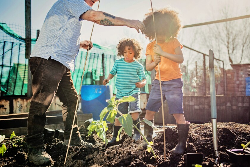 Start seeds now for your summer vegetable crops, such as okra, tomato, peppers, eggplant and basil.