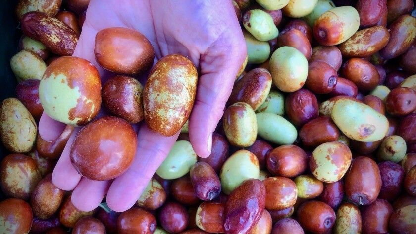 Farmers market report: Look for jujubes (real ones!) and use them to