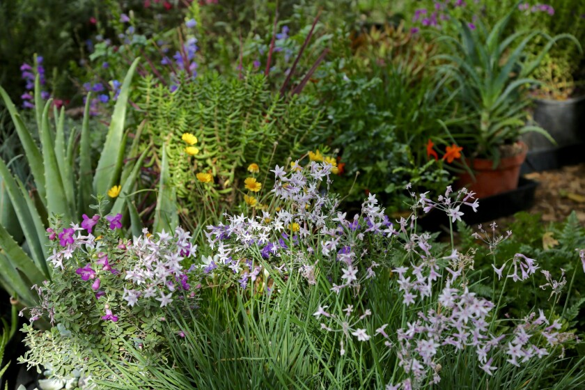 Descanso Gardens is hosting the region?s first fall plant sale next weekend, Sept. 27 - 30, with pla