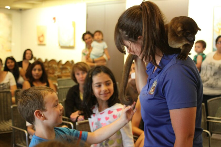 Participants got the chance to touch certain animals, such as the tail of a kinkajou.