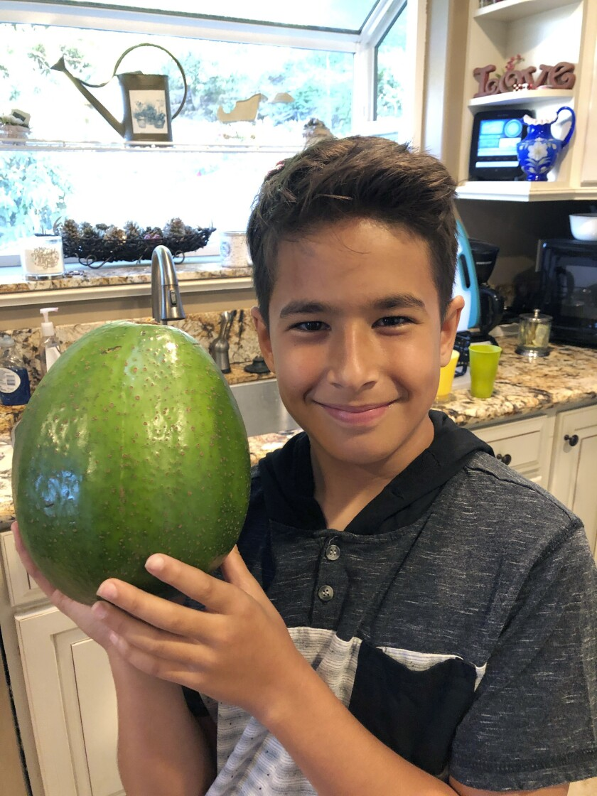 AGUACATE RECORD