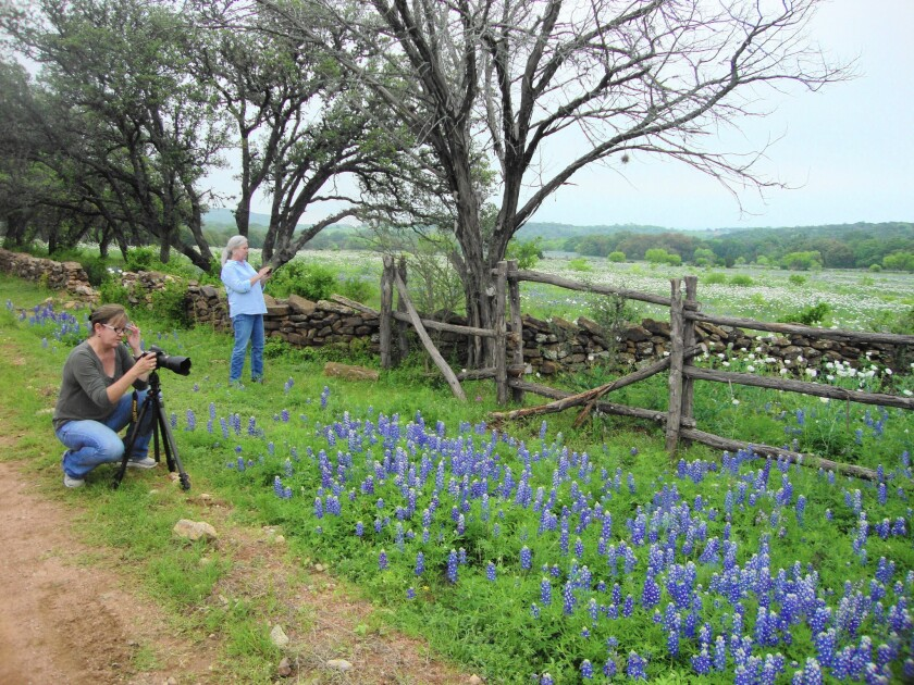 Cathy Alba, left, of San Antonio, helps Texas native PerriAngela Wickham, of Alexandria, Va., track and report about the bluebonnet season, posting photos from their scouting trip and participating in weekly webcasts.