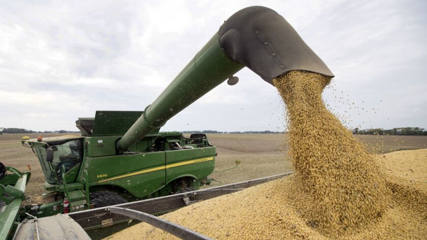 FILE - In this Sept. 21, 2018, file photo, Mike Starkey offloads soybeans from his combine as he har