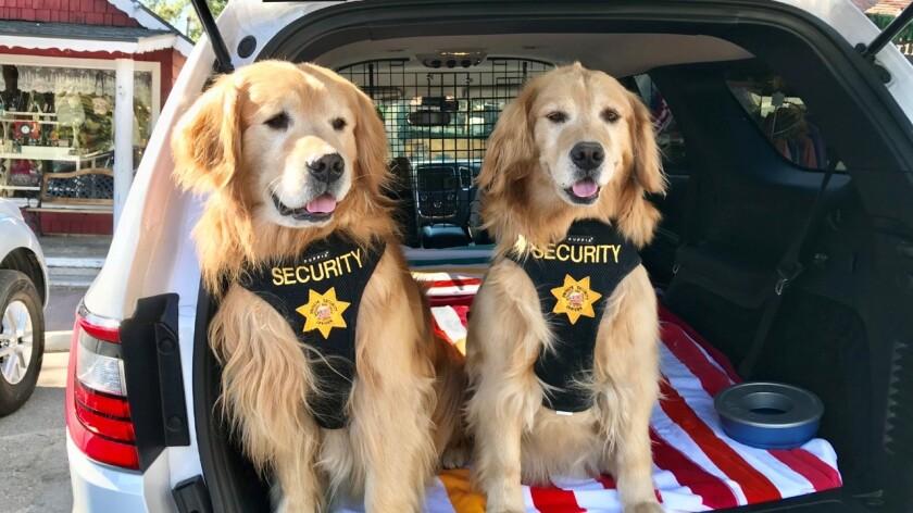 Mayor Max's deputies Mitzi and Mikey.jpg