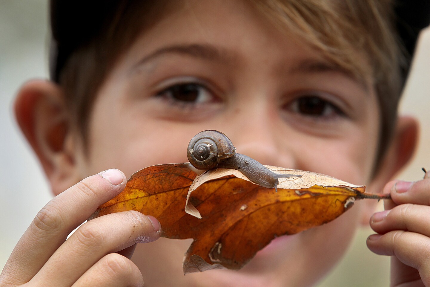 Logan Joanis, 8, with a snail he found in Eaton Canyon, just north of Pasadena. He and other citizen scientists took part in a project organized by the Natural History Museum of Los Angeles County to catalog the diversity of land snails and slugs in Southern California.