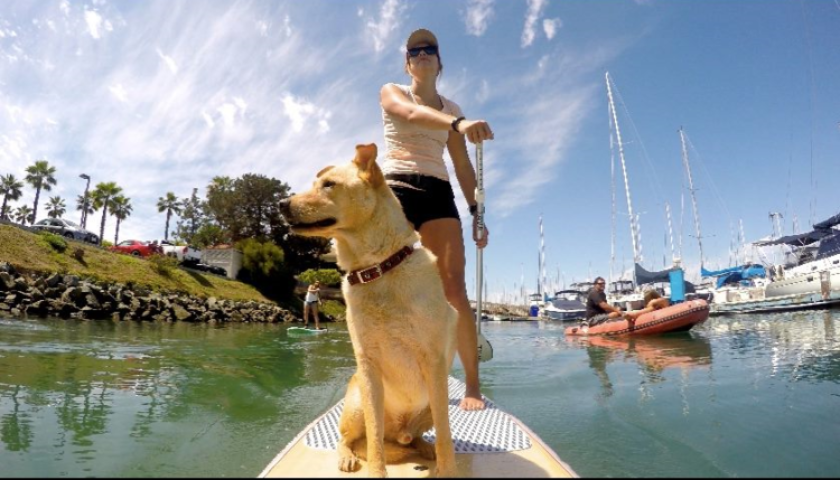 The SUP Connection's SUP Pups. (Courtesy photo)