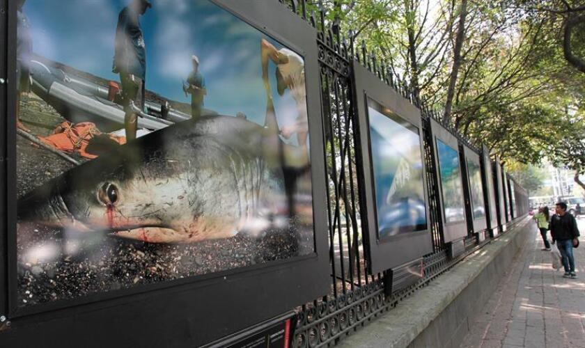 """Vista general de la exposición """"Nuestras Batallas Contra la Extinción"""" hoy, viernes 23 de febrero de 2018, en una avenida de Ciudad de México (México). EFE"""