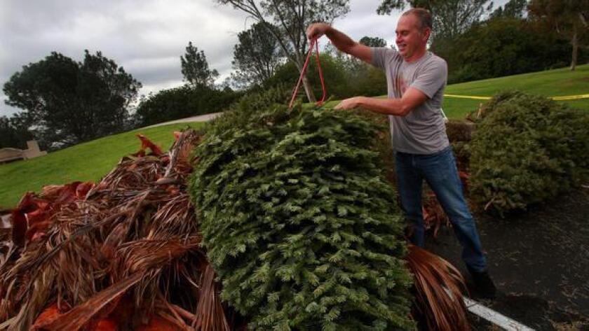 Oceanside 2021 Christmas Tree Removal Where To Recycle Christmas Trees In North County The San Diego Union Tribune