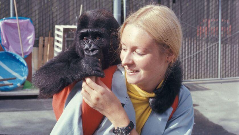 la-et-st-koko-the-gorilla