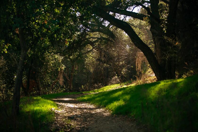 L.A. Walks near Pasadena